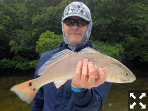 Kyle Ruffing, from Sarasota, had good action catching and releasing reds and trout on CAL Shad tails while fishing Tampa Bay with Capt. Rick Grassett.