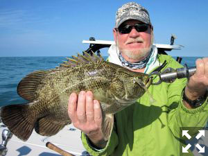 Look for tripletail in the coastal gulf during March.