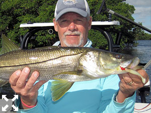 Mike Perez, from Sarasota, with a snook caught and released on a CAL jig with a shad tail while fishing lower Tampa Bay recently with Capt. Rick Grassett.
