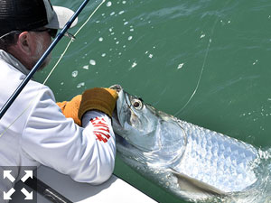Jeb Mulock, from Bradenton, fights a tarpon that was caught and released on a fly while fishing the coastal gulf with Capt. Rick Grassett.