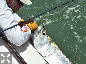 July is usually a great month to fly fish the coastal gulf for tarpon. Capt. Rick Grassett released this one that was caught on a fly in a previous July.