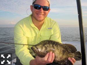 Raul Ortiz, from Longboat Key, had good action catching and releasing tripletail on DOA Shrimp while fishing Sarasota Bay with Capt. Rick Grassett in a previous August.